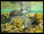 Title: Noronha Fishes