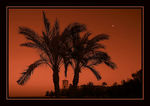 Title: Moon and Palms