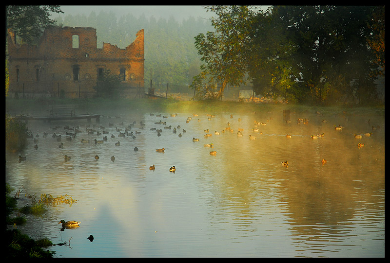 the old house and the ducks