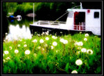 Title: Summer by the canal