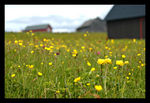 Title: Laying down in a flower-studded meadow