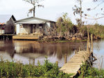 Title: Life on the Bayou