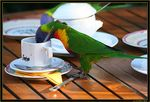 Title: LORIKEET TEA PARTY - Part 2
