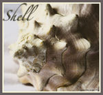 Title: She Sells Sea Shells...Canon Digital Rebel XT 350D
