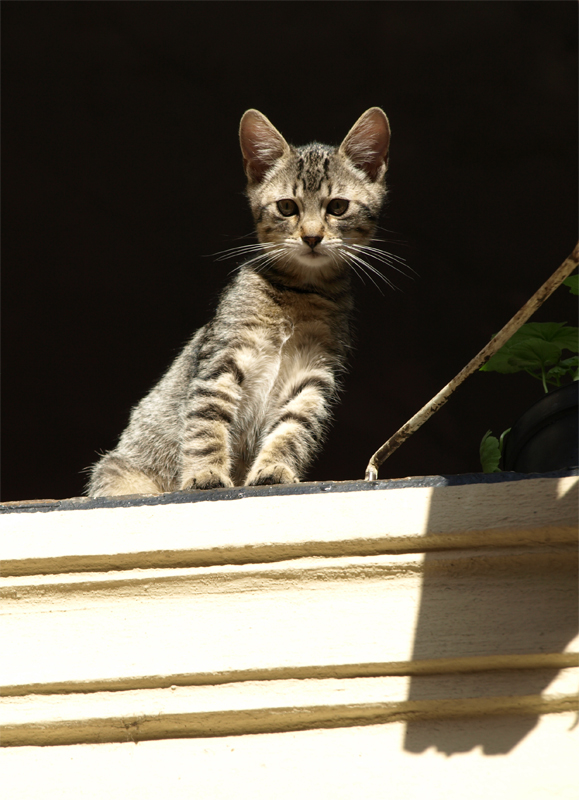 Cathedral Cat