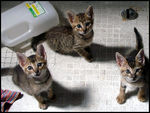 Title: kittens at 6 weeksOlympus C-7000 / C-70 Zoom