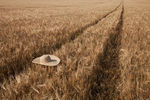 Title: hat on the field