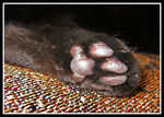 Title: Whose Paw?