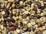 Title: Coffee Beans
