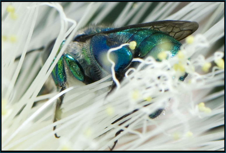 Colorful Bee