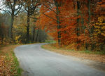 Title: Road in the forestNikon D70