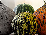 Title: Melons