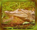 Title: Crocodile - Lecon N�1Panasonic Lumix DMC-FZ7