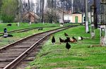 Title: chicken way...Konica Minolta Dimage Z10