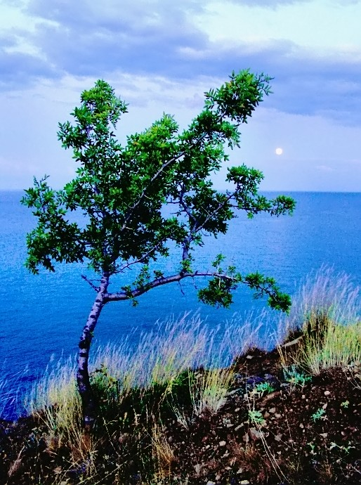 lonely in blue...