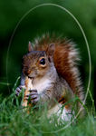 Title: Lovely squirrelCanon EOS 30D