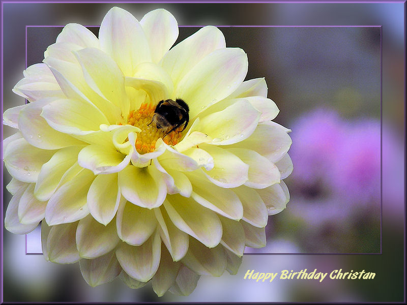 Birthday wishes for Christan