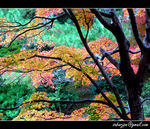 Title: Nature Painting (Autumn #1)Nikon Coolpix P3