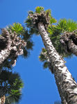 Title: Up with palm trees