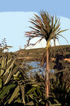 Title: Cabbage tree
