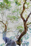 Title: Ghost tree