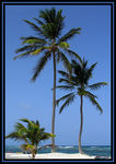 Title: Three Palm TreesCanon Powershot Pro 1