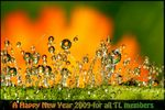 Title: Natural Fireworks into a happy 2009!