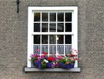 Title: Dutch Windows