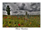 Title: Field of Remembrance
