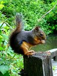 Title: squirrel - from another positionSony CyberShot DSC-P200