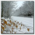 Title: Winter coming..Sony Alpha 100 DSLR