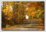 Title: Autumn Country RoadSony Alpha 100 DSLR