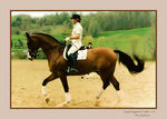 Title: Dressage Horse in Motion