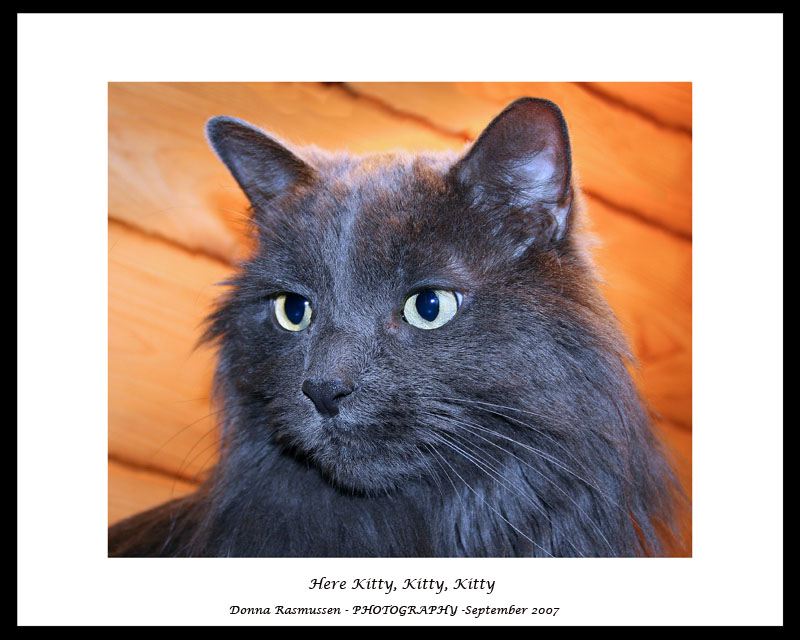 Kitty for Kilted :o)