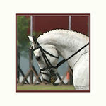 Title: Dressage in Watercolor