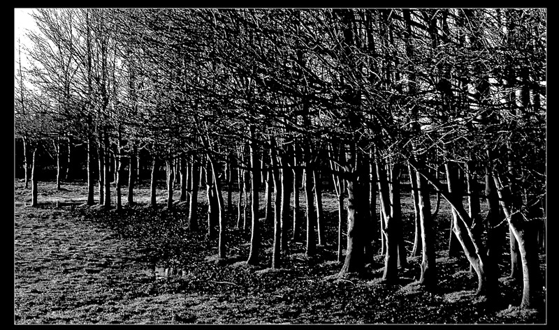 The Whispering Trees