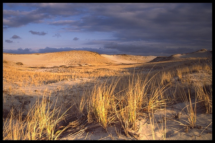 Dunes of the Cape