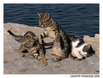 Title: KUNG FU CATS :)