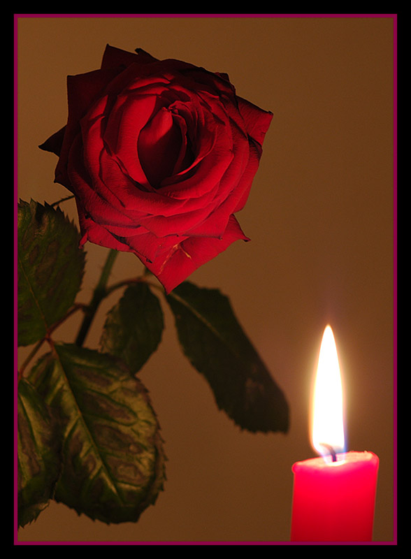 Rose by candle light