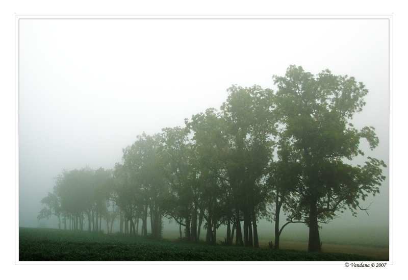 Mysterious Foggy Morning-III