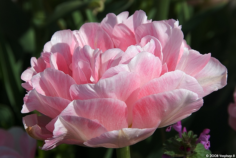 Why to wait for Peony?