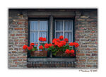 Title: Window in Red