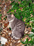 Title: Cat in the woodCanon PowerShot S3 IS