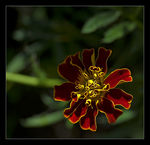 Title: Red and Yellow FlowerCanon EOS 20D