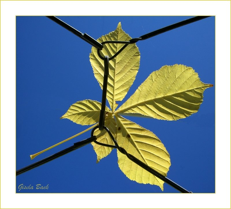 leaf in the sky