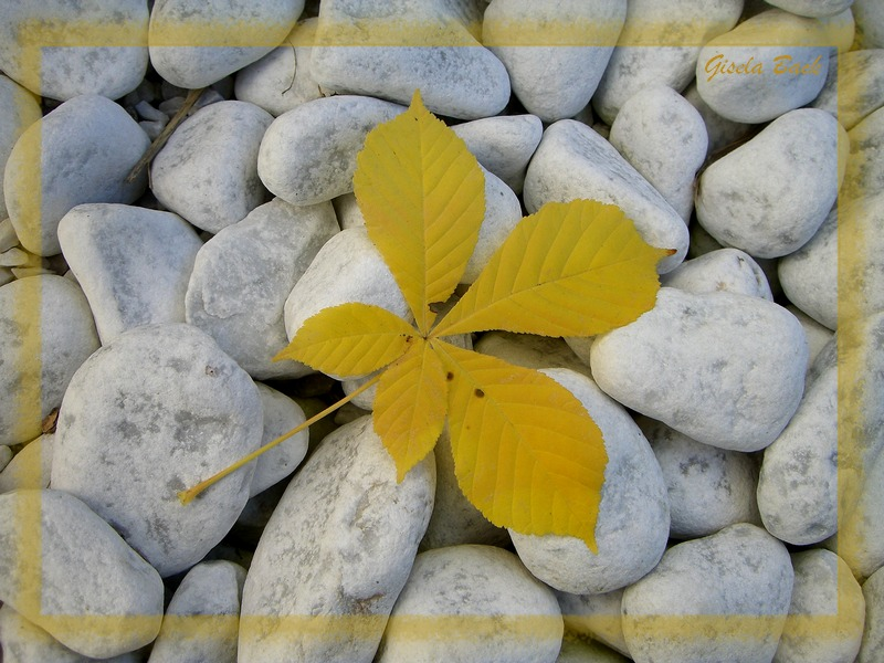 leaf and stones