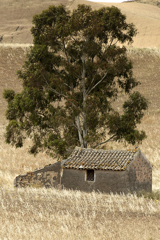 The house and the tree