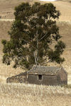Title: The house and the treeNikon D200