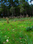 Title: Forest and red anemonesPanasonic Lumix DMC-FZ20