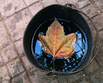 Title: That Bucket of Leaf
